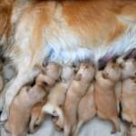 Cuanto dura el embarazo de un perro