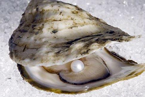 Una perla tarda en formarse 10 años