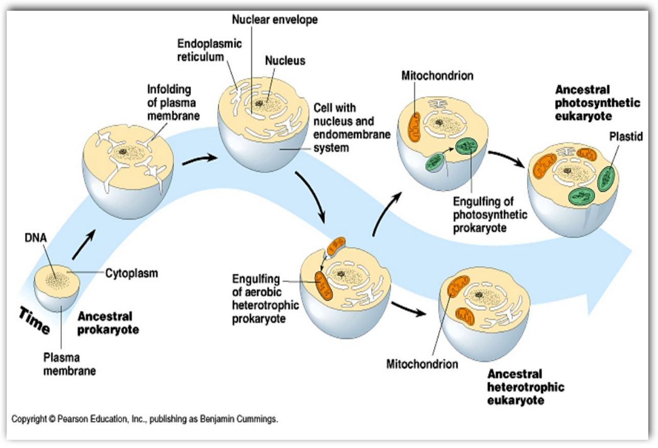 que-es-la-evolucion-celular